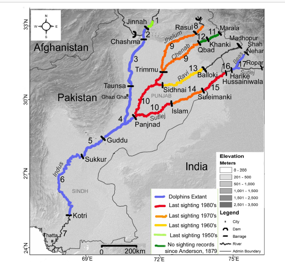 Lost Indus Dolphins In The Beas River India Iucn Ssc Cetacean